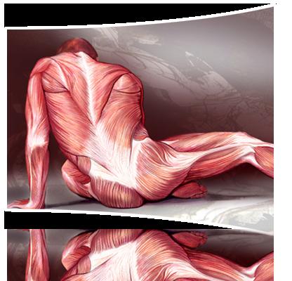 The Muscular System Studyjams Science Scholastic